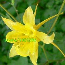 Bloom Green Co. Geben Sie shiping 100 Samen