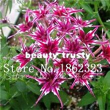 Bloom Green Co. Mixed Phlox Bonsai Blume Semente