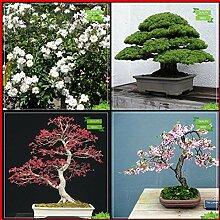 BloomGreen Co. Gartendekoration Combo Blumensamen: