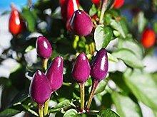 BloomGreen Co. Zier Seeds: Zierpflanze Samen Samen