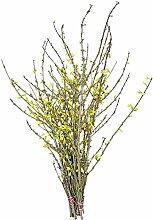 Blühende Forsythienzweige: frühlingshafte Wohnraumdekoration aus echten Zweigen - Osterdekoration 2018 - (50 echte Zweige, 80 cm)