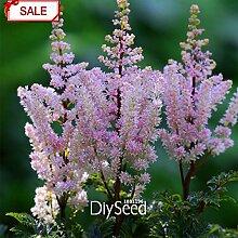 Blühende Pflanze Paeonia Lactiflora Samen 180pcs, Verschönern Gemeinsame Garten Peony Samen, Staude Chinesische Pfingstrose Seeds