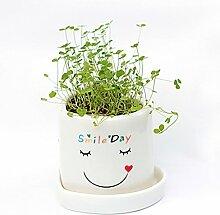 Bluelover Diy Mini Glück Angel Grass Topfpflanzen Liebhaber Pflanze Desktop-Dekor-01