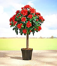 Blütenbaum Kunstbaum Kunstpflanze Baum Pflanze