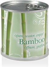 Blumen in der Dose - Bambus - Bamboo