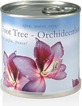 Blumen in der Dose - Orchideenbaum
