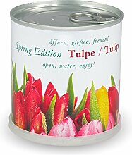 Blumen in der Dose Spring Edition Tulpe