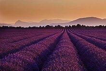 Blumen Lavendel Foto-Tapete - Größe 315x232 cm