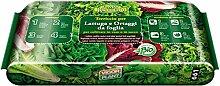 Blumenerde für Salat und Gemüse-foglia20