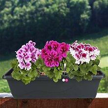 Blumenkasten anthrazit 59cm mit Bewässerung