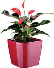 Blumenkasten SENSE mit Erd-Bewässerungs-System,