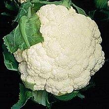 Blumenkohl Schnee Crown Gemüsesamen