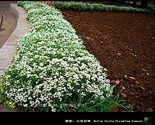 Blumensamen Bonsai neuer Hausgarten Pflanze