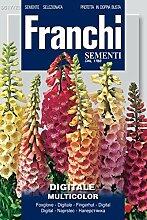 Blumensamen - Fingerhut Digitale Multicolor von