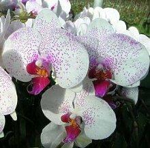 Blumensamen für zu Hause Garten