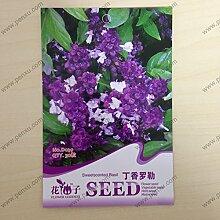 Blumensamen Pfingstrose-Samen, Paeonia suffruticosa, Strauch Samen- MIXED Gartendekoration Pflanze 20pcs AA