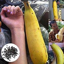 Blumensamen Pflanzensamen 1 Tasche große Banane