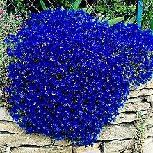 Blumensamen Pflanzensamen 100Pcs/Bag Cress Samen