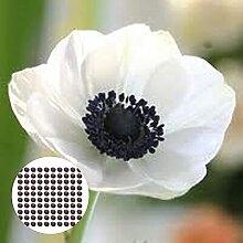 Blumensamen100Pcs/Bag Anemone Samen sicher schnell