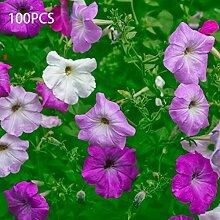 Blumensamen100Pcs/Bag Blumensamen Morgen Glory
