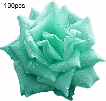 Blumensamen100Pcs/Bag Rose Samen süß leicht zu