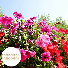 Blumensamen50Pcs/Bag Nasturtium Blumensamen