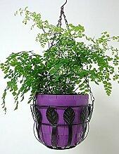 Blumenständer Hängendes Korbblumentopfgestell Eisen hängen fleischig Pflanze Regal Europäische Art einfaches hängendes Blumen-Korbgestell Pflanzentreppe ( Farbe : Schwarz , größe : 23cm*13.5cm*58.5cm )