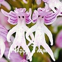 Blumentöpfe Pflanzgefäße Affengesicht Orchideen