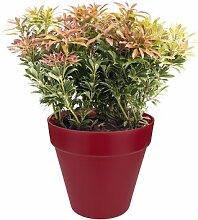 Blumentopf ELHO