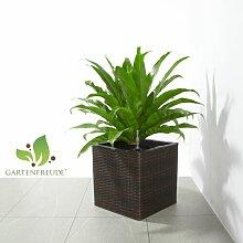Set4 Keramik Blumentopf Nova terracotta+Bewässerungs-Set für Hydropflanzen
