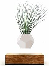Blumentopf Lyfe aus Holz Wooden