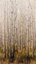 Bodenmeister Fototapete Birken-Wald B/L: 1,59 m x