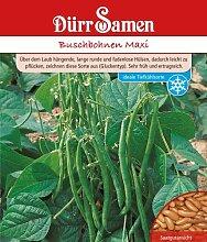 Bohnen - BuschBohnen - Maxi, 250 g von Dürr-Samen