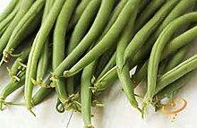 Bohnen, Top Crop Samen, Bio, NON-GMO, 1000 Samen