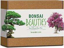 Bonsai Beauties Geschenk-Samenset. Everything You