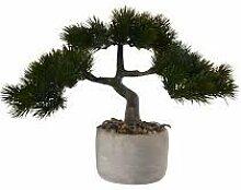 Bonsai Kiefer pinus mugo, 22,5x14,5x24,5 cm ,