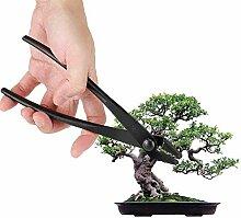 Bonsai Zange Profi Qualität Bonsaiwerkzeug