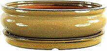 Bonsaischale mit Untersetzer 25.5x19x8cm Oliv Oval
