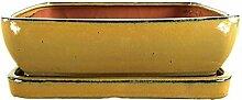 Bonsaischale mit Untersetzer 30.5x24.5x9cm Oliv