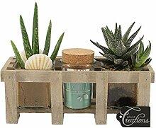 BOTANICLY | Zimmerpflanze | Höhe: 20 cm | Aloe
