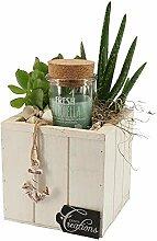 BOTANICLY | Zimmerpflanze | Höhe: 30 cm | Aloe
