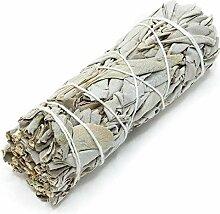 BRAND NEWS Weiße Sage Sockel Sticks, Salbei