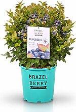 BrazelBerry - delicious & beautiful