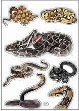 Brett A4Aufkleber-Schlangen selbstklebend