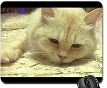 Britney Spears Hängematte Paradise Möve Mauspad, Mousepad (Katzen Mauspad)