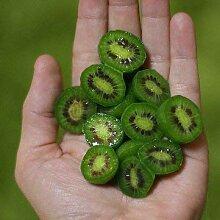 Bshopy 100 stücke mini kiwi berry samen spezielle