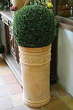 Buchsbaumkugel, 50cm, 2Stück, sehr schöne