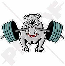 BULLDOG Gewichtheben Hund 150mm Auto & Motorrad Aufkleber, Vinyl Sticker