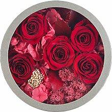 Bunte Rose Ewige Blume