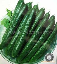 Burghardt Gurke-Samen, weniger Thorn Gurke Sorten